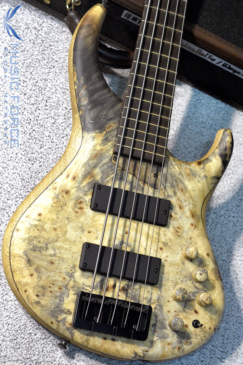 MTD 535-24 US Custom Bass Korina(White Limba) Body-Buckeye Burl Top w/Wenge FB(2018년산/신품)